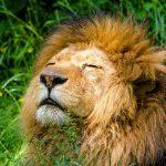 Cómo es Tener el Ascendente en Leo