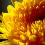 La flor de cada signo del zodiaco