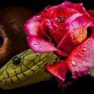 Porqué Aries y Escorpio se atraen